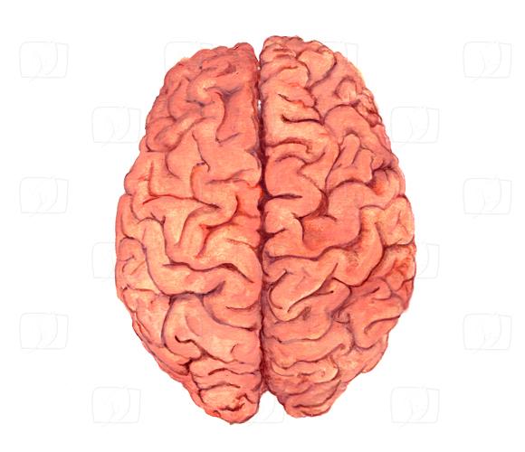 Gehirn – Seite 2 - Archiv - Dokus direkt als Stream anschauen ...
